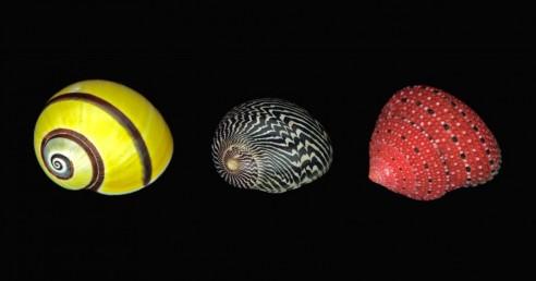 Three Small Shells